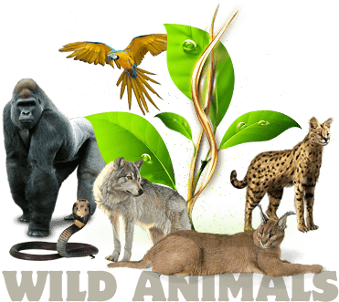 WILD CATTERY - WILD ANIMALS FOR SALE
