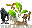 WILD CATTERY — WILD ANIMALS FOR SALE Logo